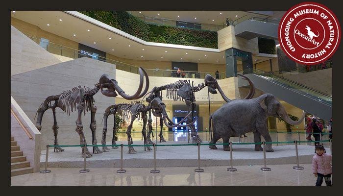 Dinosaur_Museum_1