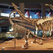 Dinosaur_Museum_2-300x171