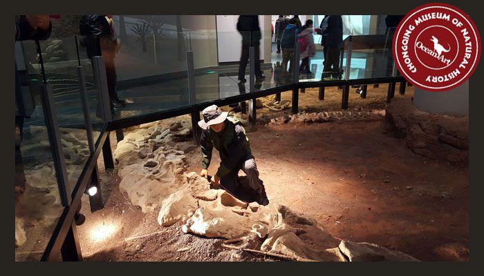 Dinosaur_Museum_3