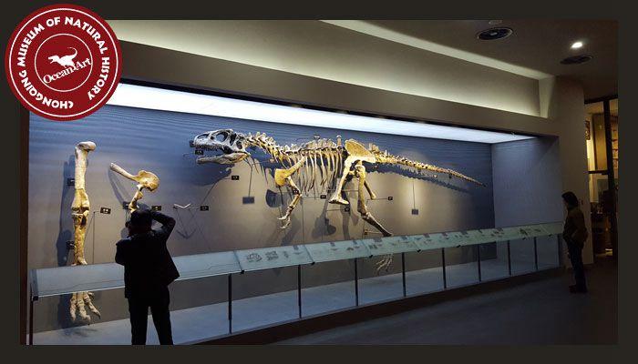 Dinosaur_Museum_4