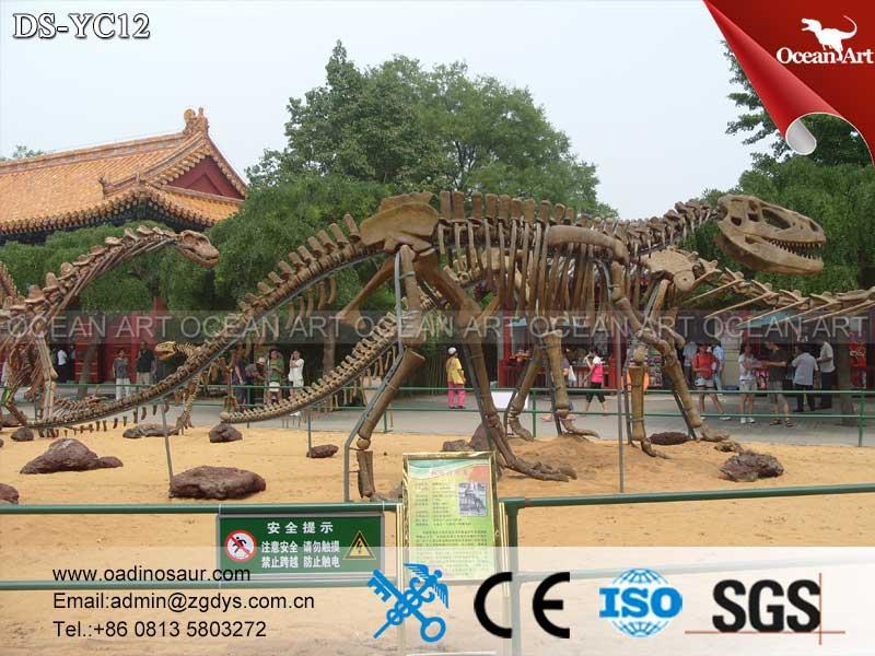 Dinosaur_Skeleton_Replica_for_Dinosaur_Museum_Exhibitions