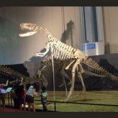 dinosaur_fossil_show_1