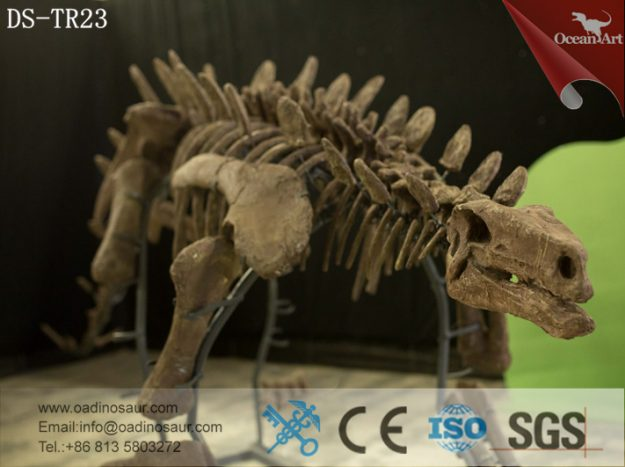 Life Size full real dinosaur skeleton replica for sale