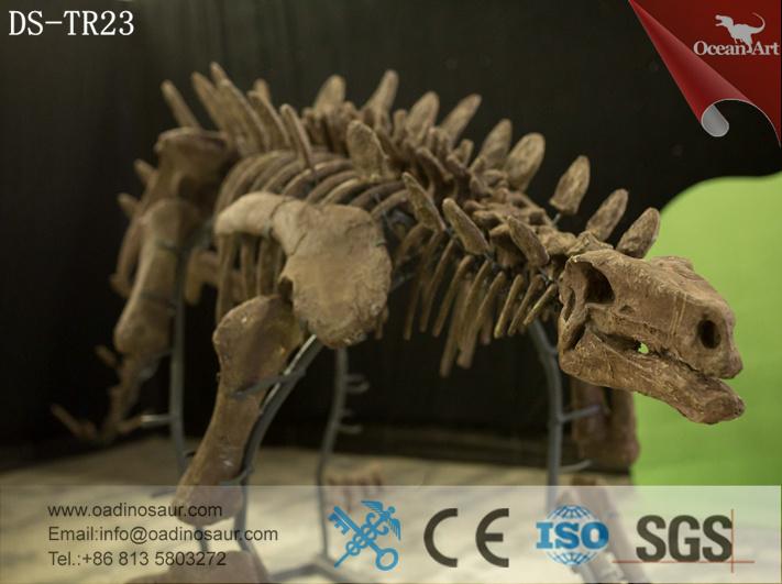 Stegosaurus_Skeleton_1