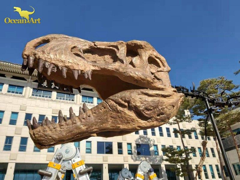 dinosaur skeleton (3)