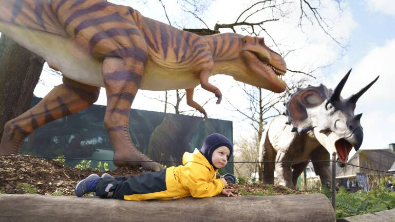 zoo dinosaur project